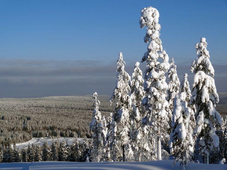 Vistas Invernales desde la cima de la Montaña Ritavaara en Pello, la Laponia Finlandesa