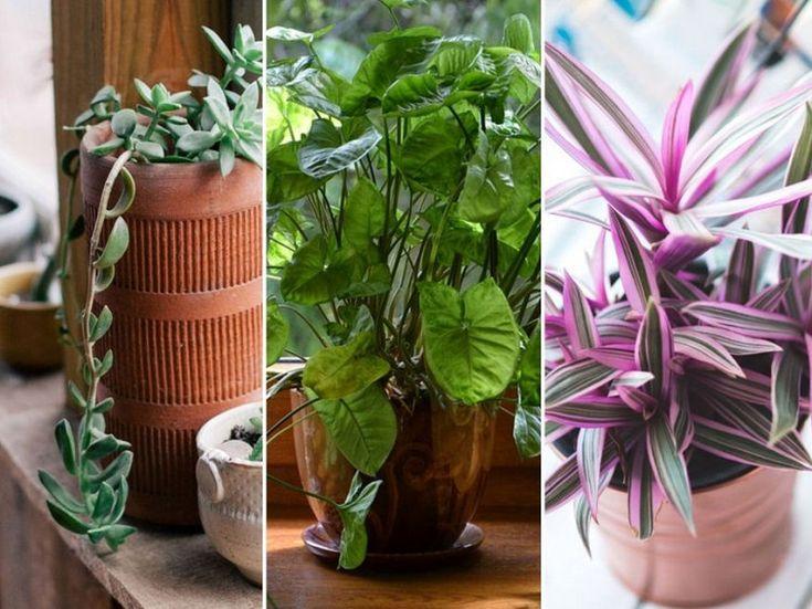 A pusztulófélben lévő növényeket is visszahozhatod a sírból egy új cseréppel.