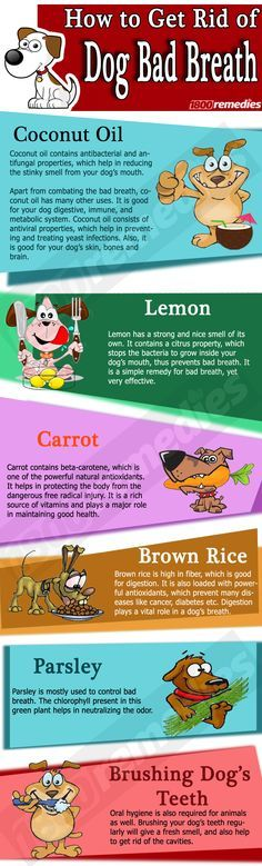 If your dog has bad breath, then you should try some of these natural remedies, which will help to fight the bad odor.