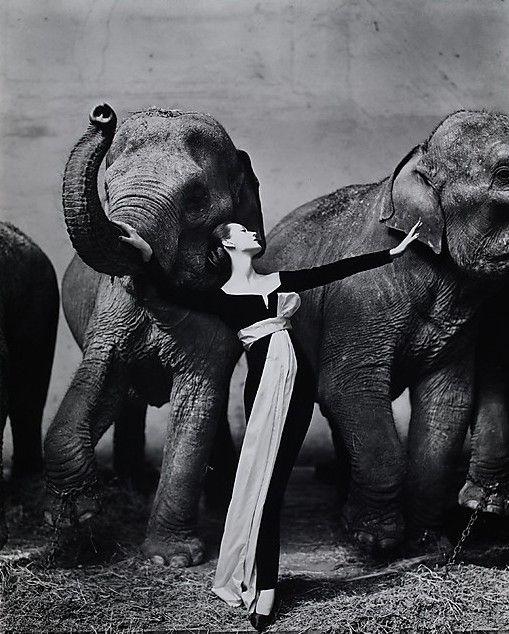 Dovima_elepants_Paris_aug_1955_Richard_Avedon.jpg (509×634)