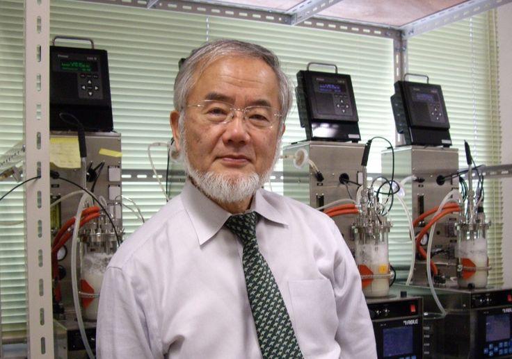 Il premio Nobel (arrivato alla sua 107esima edizione) per la medicina è stato assegnato a Yoshinori Ohsumi, biologo giapponese, per gli studi e le scoperte