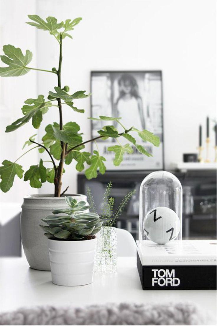 10 vijgenboom inspiratie