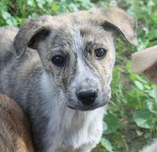 EARLGREY, Hund, Mischlingshund in Griechenland