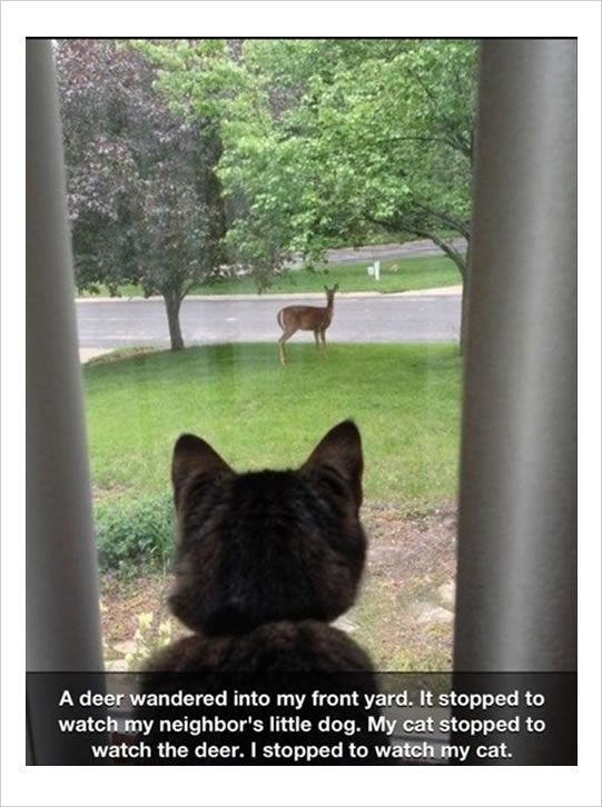 Dog watched by deer that's watched by a cat...