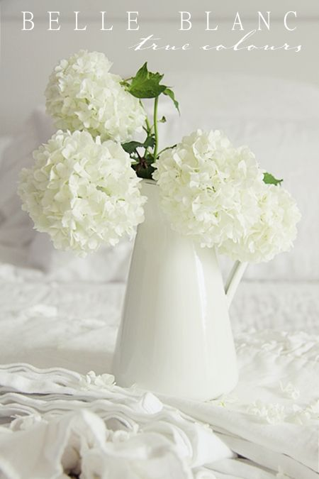 Buy silk white hydranges for my jug!