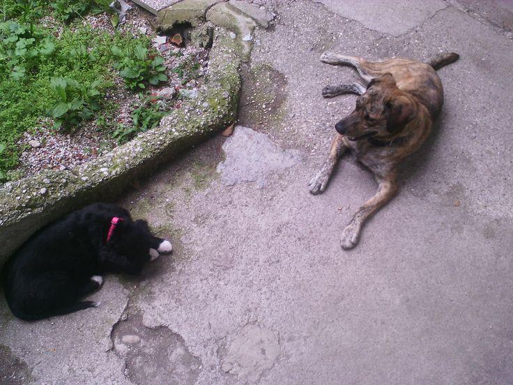 Hunde Foto: Denise-Nicole und Kiba und Sergio - Faulenzen mit neuem Spielgefärten Hier Dein Bild hochladen: http://ichliebehunde.com/hund-des-tages  #hund #hunde #hundebild #hundebilder #dog #dogs #dogfun  #dogpic #dogpictures