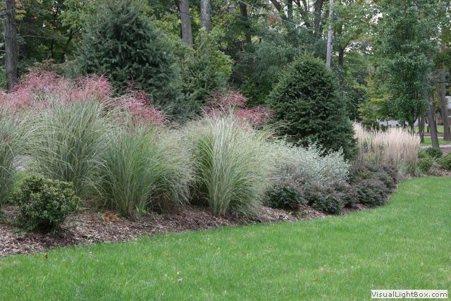 Pin by jenny giemza on gardening love pinterest for Short ornamental grasses landscape
