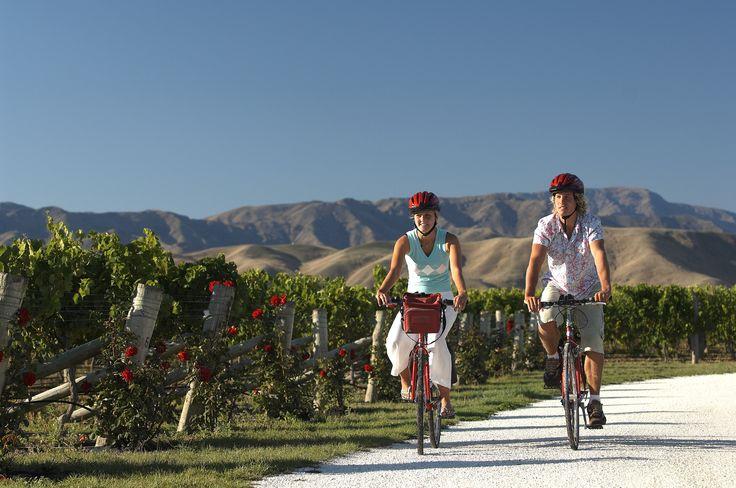 Cycling through a Marlborough vineyard.