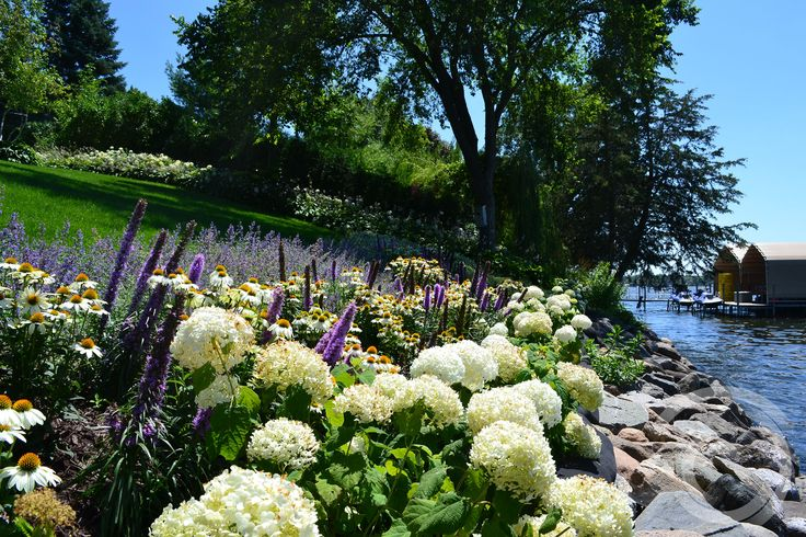 Hydrangea 'Annabelle' border with intermingled massing of Echinacea 'Powwow White' and Liatris 'Kobold' in a shoreline garden.