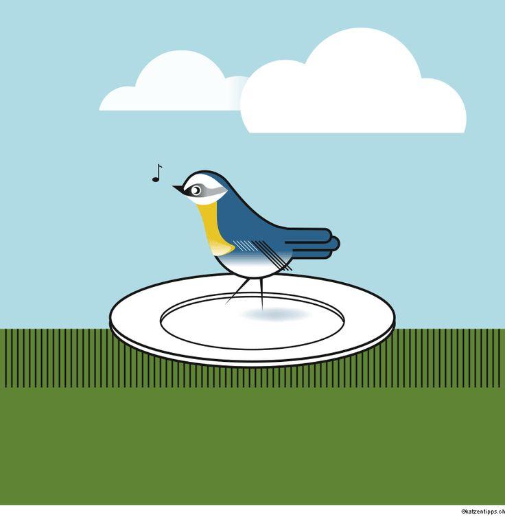 die besten 17 ideen zu drossel vogel auf pinterest. Black Bedroom Furniture Sets. Home Design Ideas