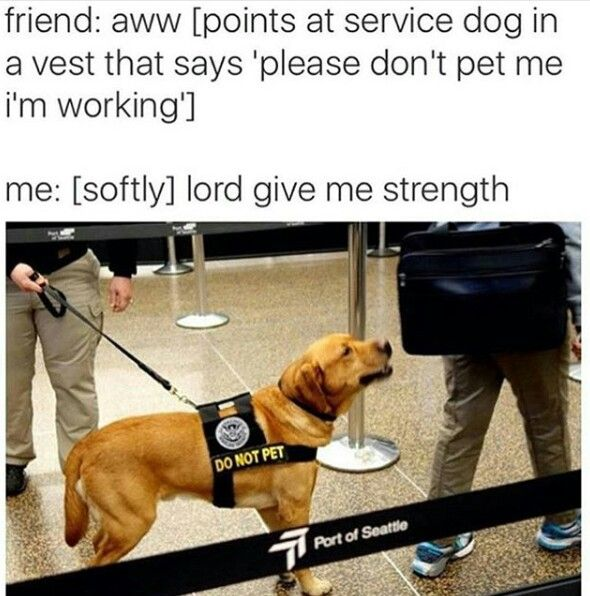 Best Dog Sitters Near Me