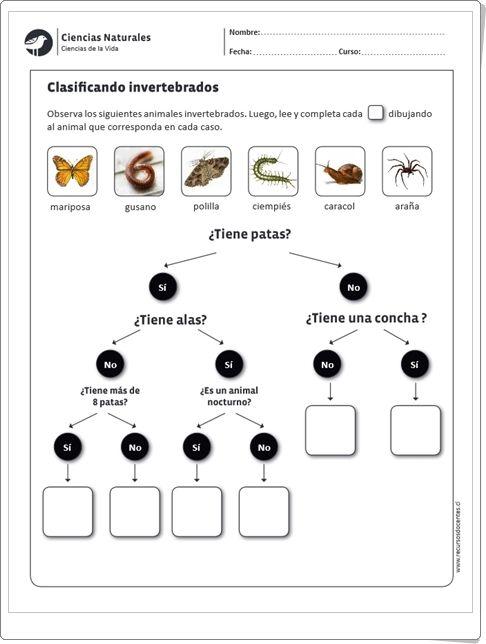 """""""Clasificando invertebrados"""" (Ficha de Ciencias Naturales de Primaria)"""