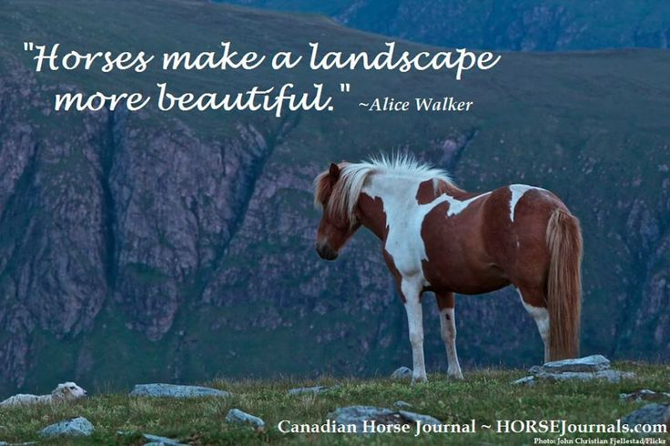 329 Best Images About Horse & Rider Sayings On Pinterest