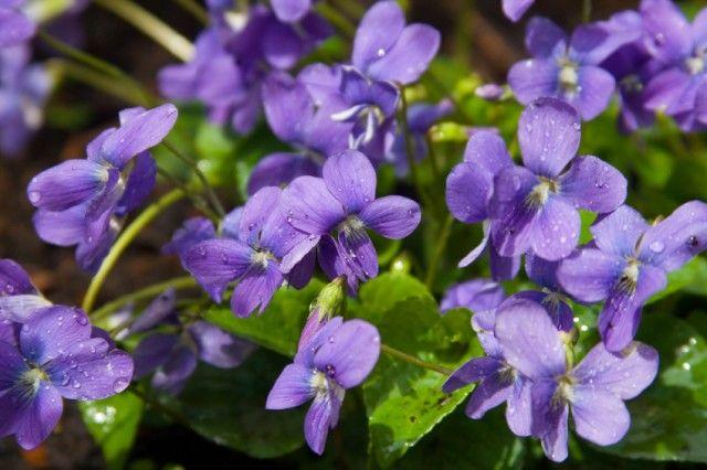 Fiori autunnali: ecco quali sono quelli da coltivare in giardino o sul balcone