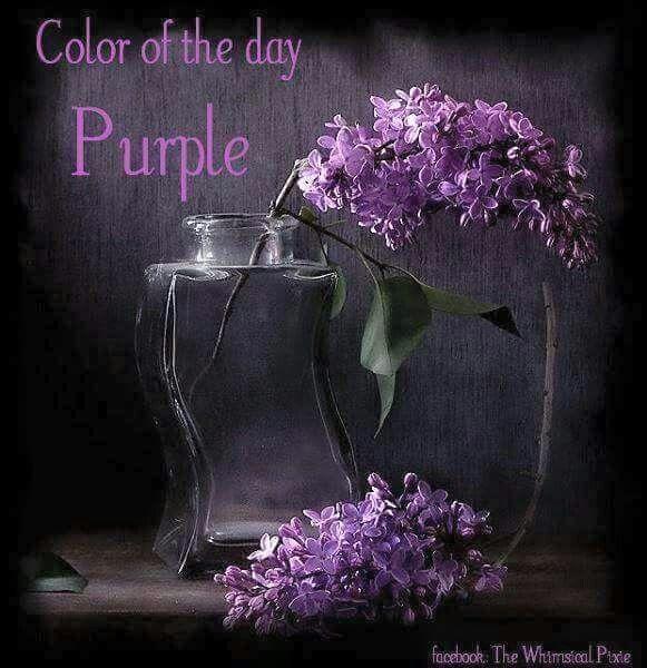 3196 Best Images About Purple Stuff On Pinterest Purple