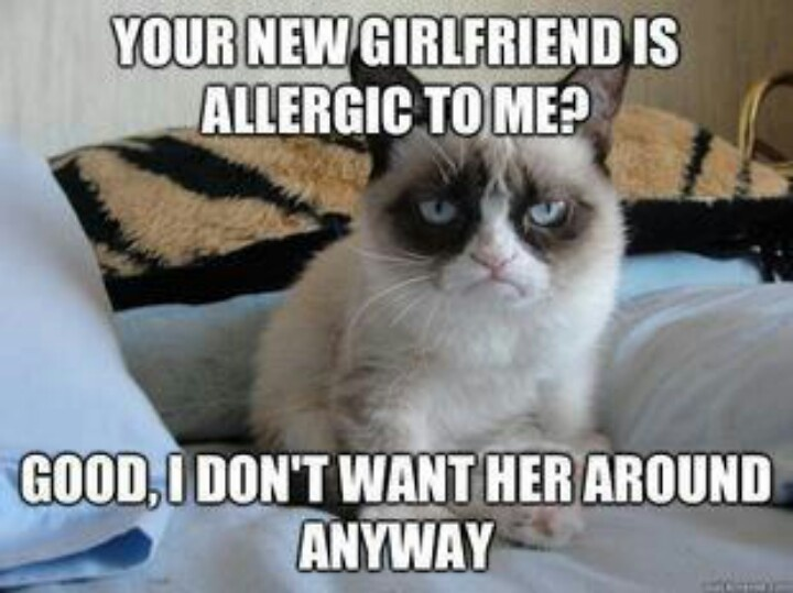 Funny Quotes About Allergies: Inappropriate Grumpy Cat Quotes. QuotesGram