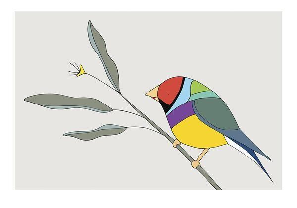 Gouldian Finch - bird art by Australian graphic designers Eggpicnic.