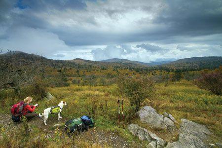 Mountain Dog Photo Contest Editor's Picks// WET DOG WONDER