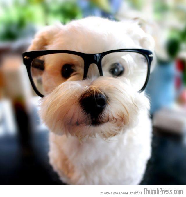 Hipster dog! :D