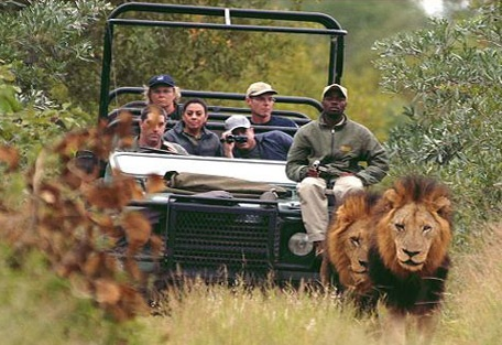 The Kruger National Park is the flagship of the South African national parks and has been rated as one of the best wildlife parks in Africa renowned for its incredible game viewing and big five safaris.