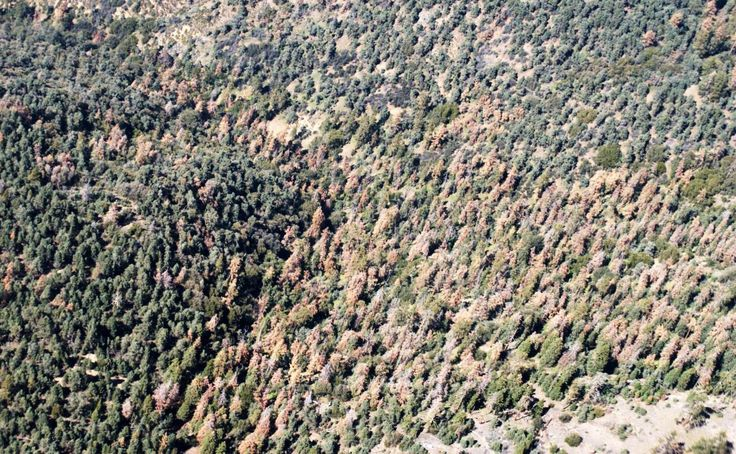 The number of dead trees in California's drought-stricken forests has risen dramatically to more than 102 million in what officials described as an unparalleled ecological disaster that heightens the danger of massive wildfires and damaging erosion.