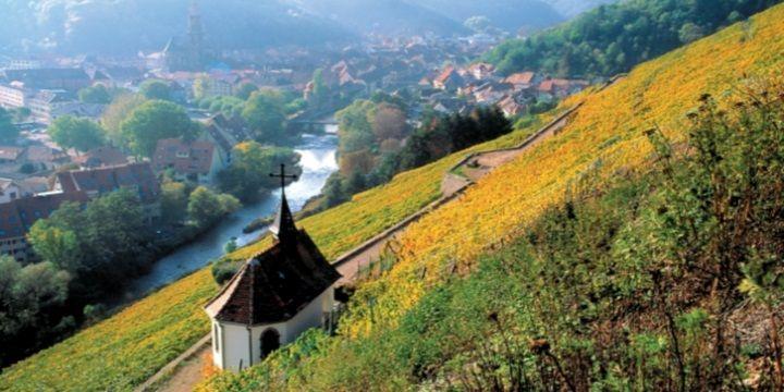Vinerna som framställs i Alsace liknar inga andra franska viner. De druvtyper som odlas påträffas sällan i övriga landet och smaken skiljer sig på många sätt. Faktum är att Alsaces vinindustri har mer gemensamt med den tyska.