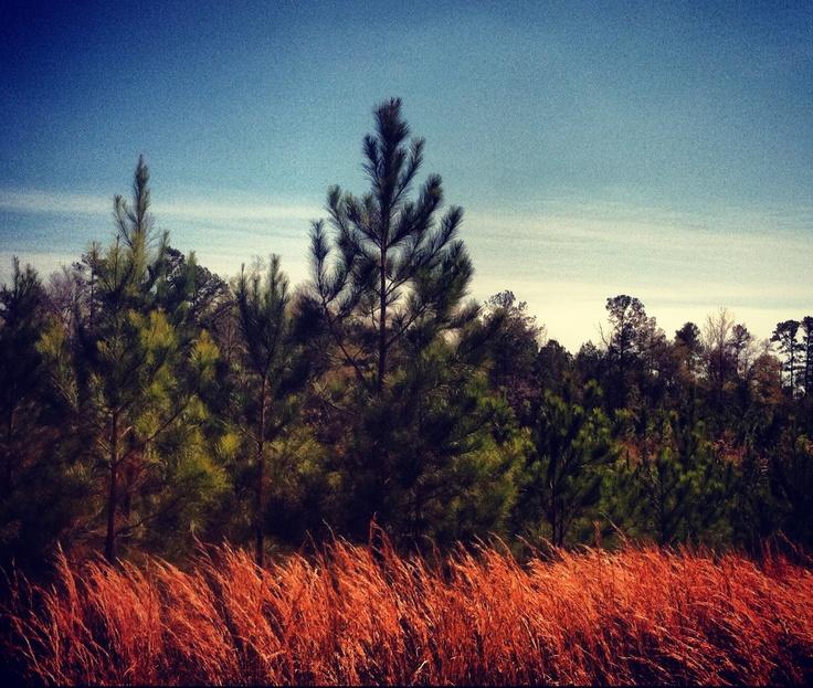 rural of Mississippi