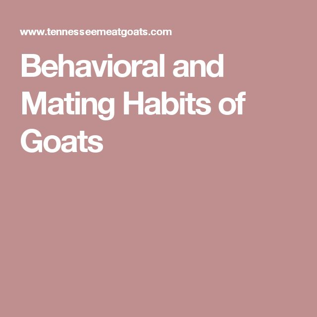 Behavioral and Mating Habits of Goats