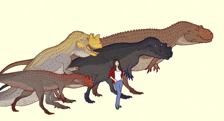 Various species of Ceratosaurus in scale with a human being. From the right to left, C. dentisculatus, C. nasicornis, C. magnicornis, juvenile specimen.  Buy a print of this work at Zazzle.com  www.cmkosemen.com