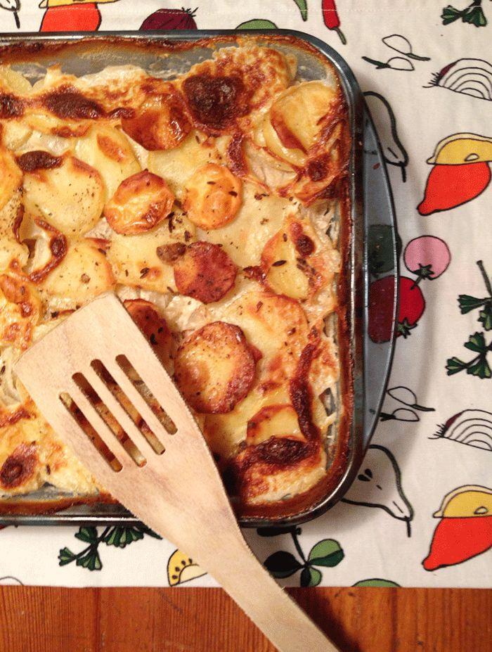 Finnische Küche: Lachs-Fenchelauflauf ( Lohi-fenkolilaatikko )