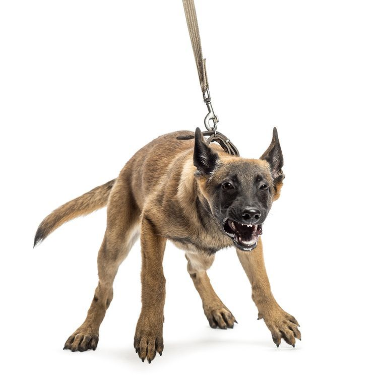 Leash Aggression Leash lunging, leash reactivity and leash aggression are all behaviors that are caused by a dog f...