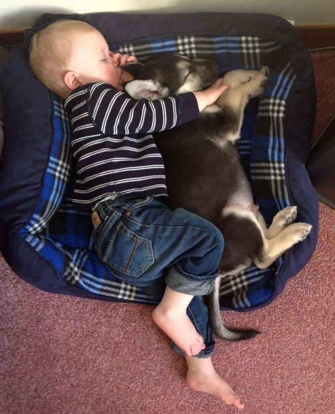 Картинки по запросу baby growing up with dog