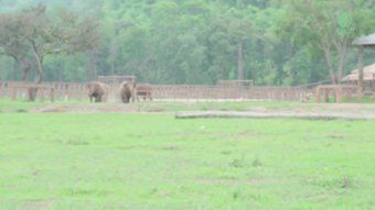 Sound On: Elephants rushing to greet a new orphan at an elephant sanctuary. ❤️❤️❤️❤️❤️❤️❤️❤️❤️🐘😥🌎💚💚💚💚💚