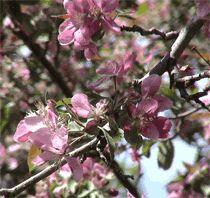 Santé et vinaigre de cidre provenant du complexe nutritif  de la pomme