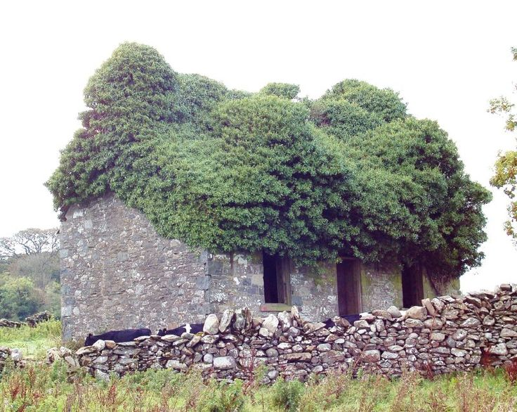 7 Amazing Houses Built Into Nature: 11 Best Naturally AMAZING Images On Pinterest