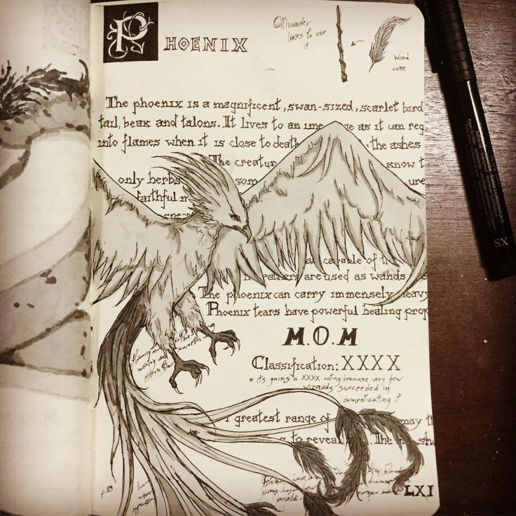 Fantastic Beasts Guide 2: The Phoenix This is a project that began during Inktober and is currently in progress #fantasticbeasts #harrypotter #newtscamander