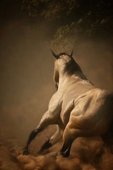 The dramatic lighting. The defined muscle lines. The buckskin beauty. I love it! :)