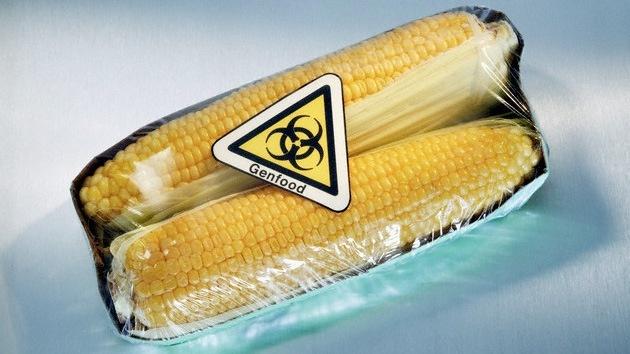 El maíz transgénico además de pobre en nutrientes es tóxico