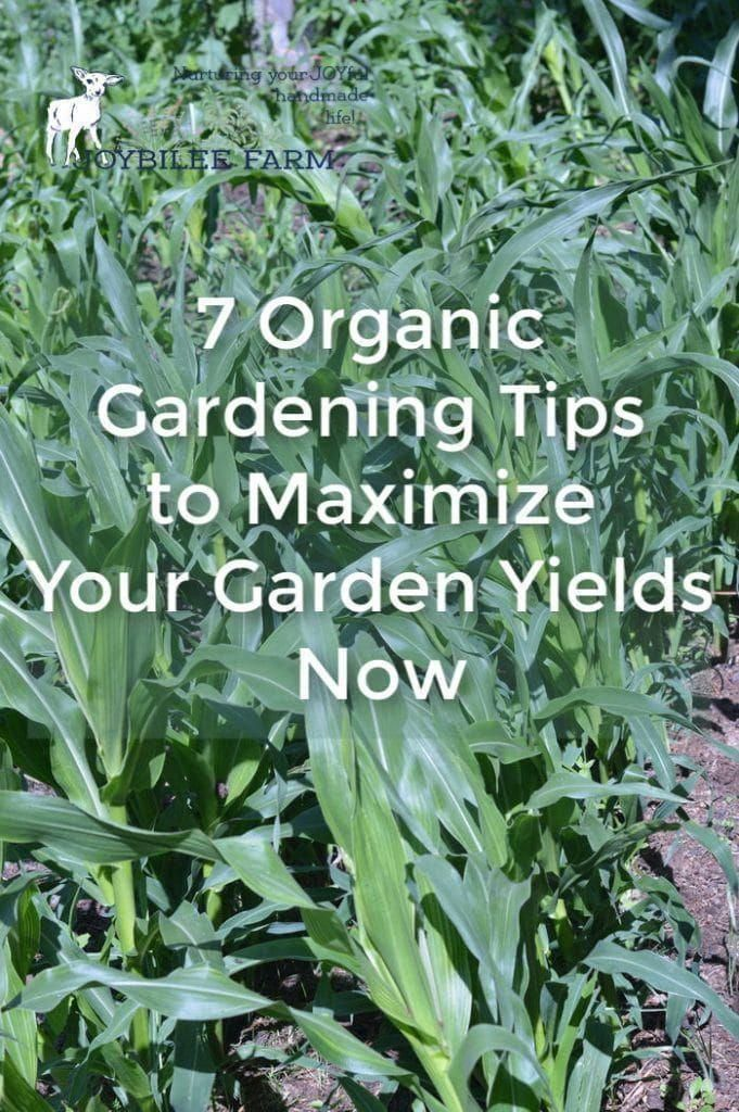The Dead Soil Needs Increasing Doses Of Traditional Fertilizer And Still The Plants Are Mal Organic Gardening Tips Organic Vegetables Organic Vegetable Garden