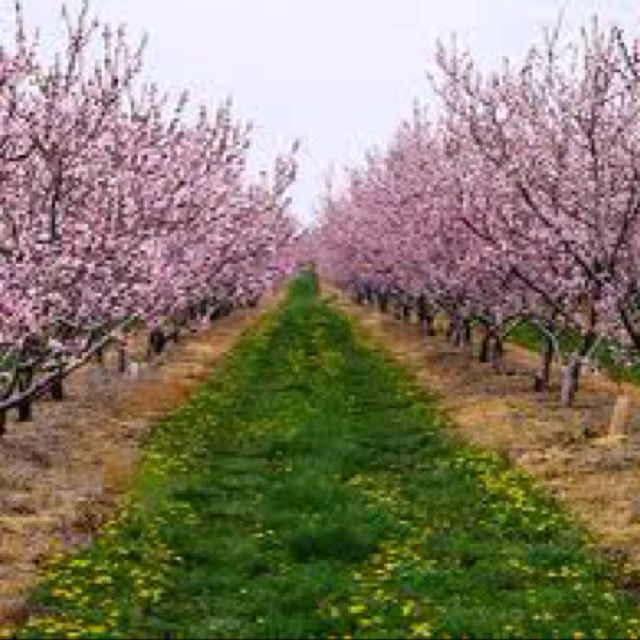 17 Best Images About Gardening Fruit Trees On Pinterest
