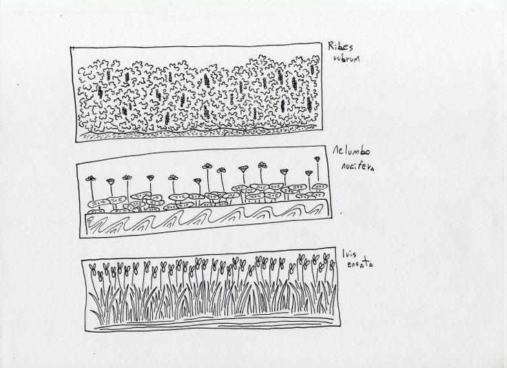 schizzi e disegni | plantula – studio di progettazione del verde