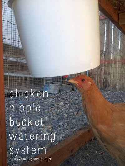 Easy tutorial on how to make a Chicken Nipple Waterer using a Plastic Bucket. Cost under $10 + took 5 minutes to make. Keeps chickens healthy too.