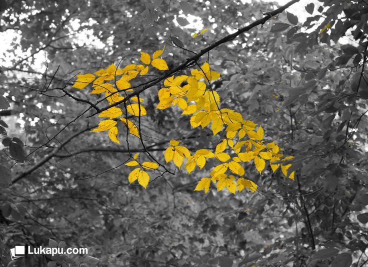 ne yapıp yapıp dalı unutmalı rüzgarla yere düşen sarı yaprak. Afşar Timuçin #Lukapu #Fotokitap #Fotograf #Sonbahar