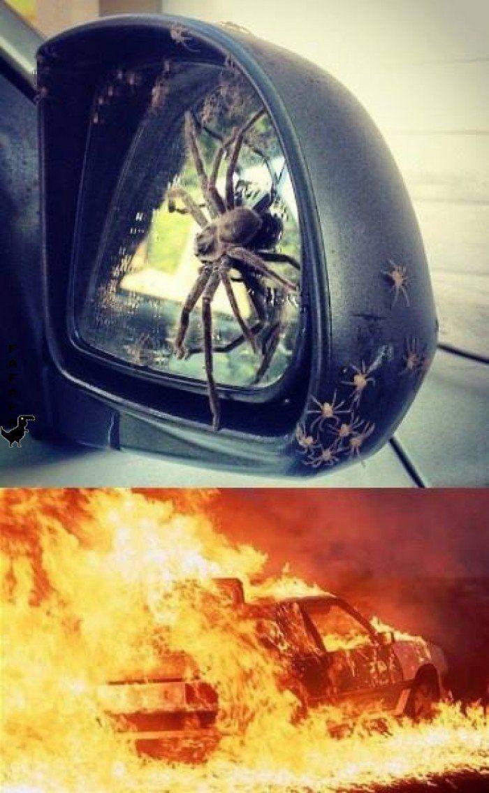 Cualquiera hubiera hecho lo mismo #funny #araña #fuego #voslohubierashecho #me2 #fafafa #humor
