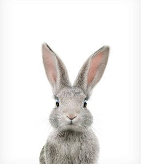 Rabbit print, Bunny, Animal print, Baby rabbit art, Woodland Nursery decor, Animal art, Baby animals, Nursery wall art, The Crown Prints