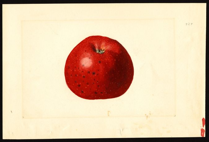 Why Your Supermarket Only Sells Five Kinds of Apples | Mother Jones