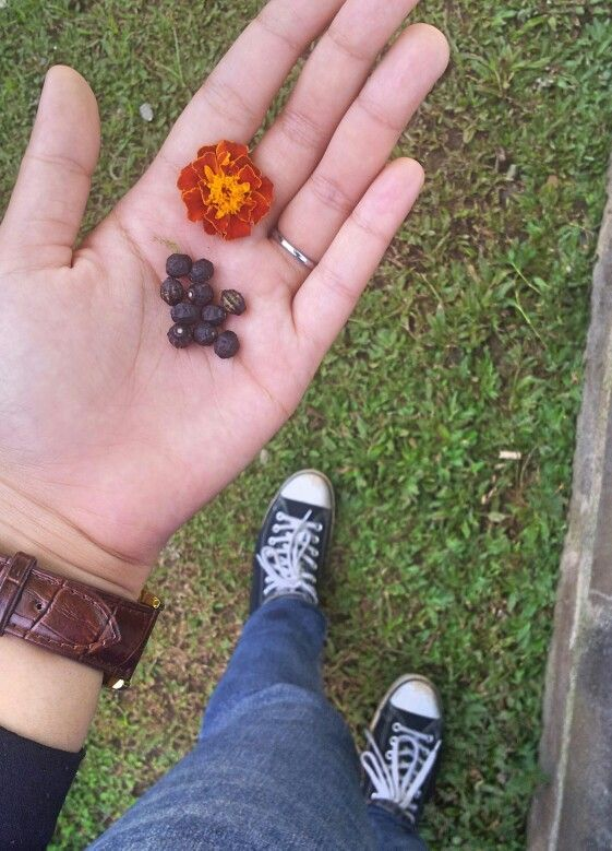 Natural photography : Seeds and flower. Sukun, East Java.