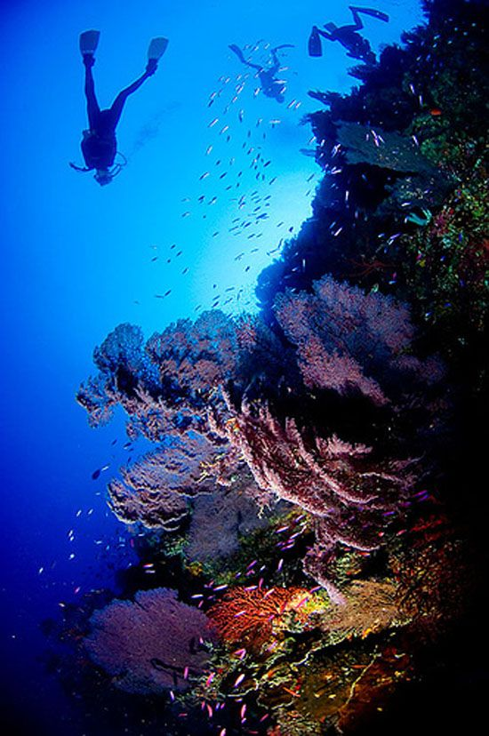 Scuba Diving - reminds me of my first vacation dive to Palancar, Cozumel, Mexico.