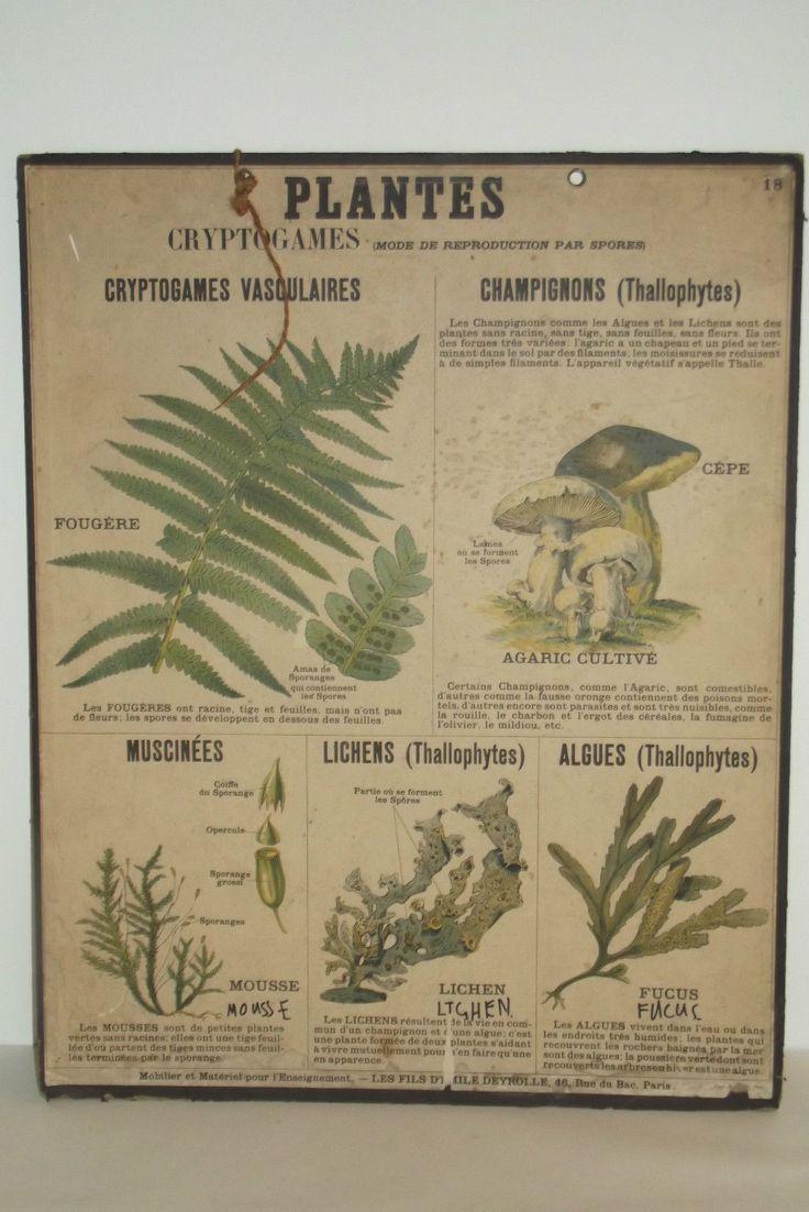 09a37 ancienne affiche scolaire deyrolle planche ecole n 18 sciences naturelles science. Black Bedroom Furniture Sets. Home Design Ideas