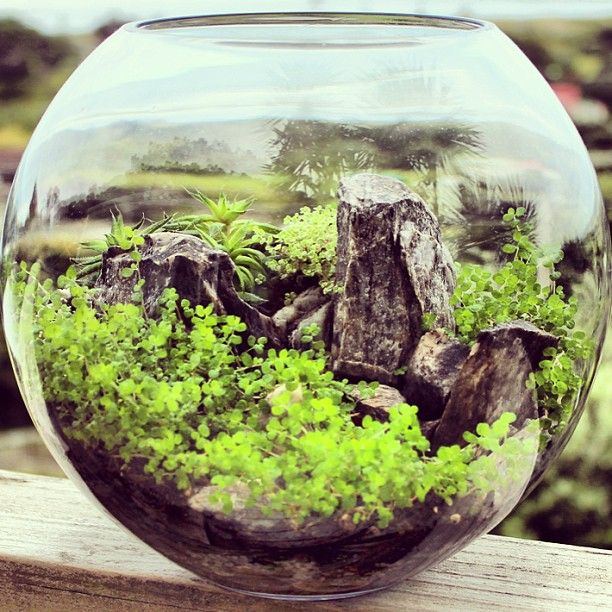 Lush World - Terrarium by bioattic